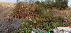 Arges: Gunoaiele zac la marginea comunei Mozaceni. Ele  sunt o sursa de infectie pentru locuitorii din zona!